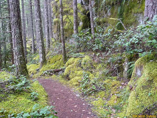 Old_Si_Trail_Mount_Si_1 hikes_in_washington_4