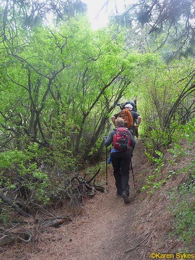 Ray_Westberg_trail_1 hikes in washington_1