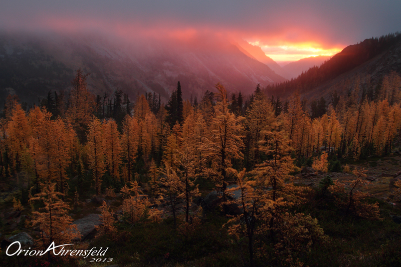 Larch Sunrise