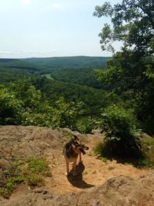 Photo by Liz Forster - Man's Best Friend enjoying some East Coast hiking