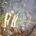 From Fire to Feast: Rugged Backcountry Cooking
