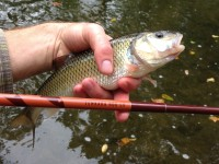 Tenkara Rod Co. Sawtooth Tenkara Rod Review