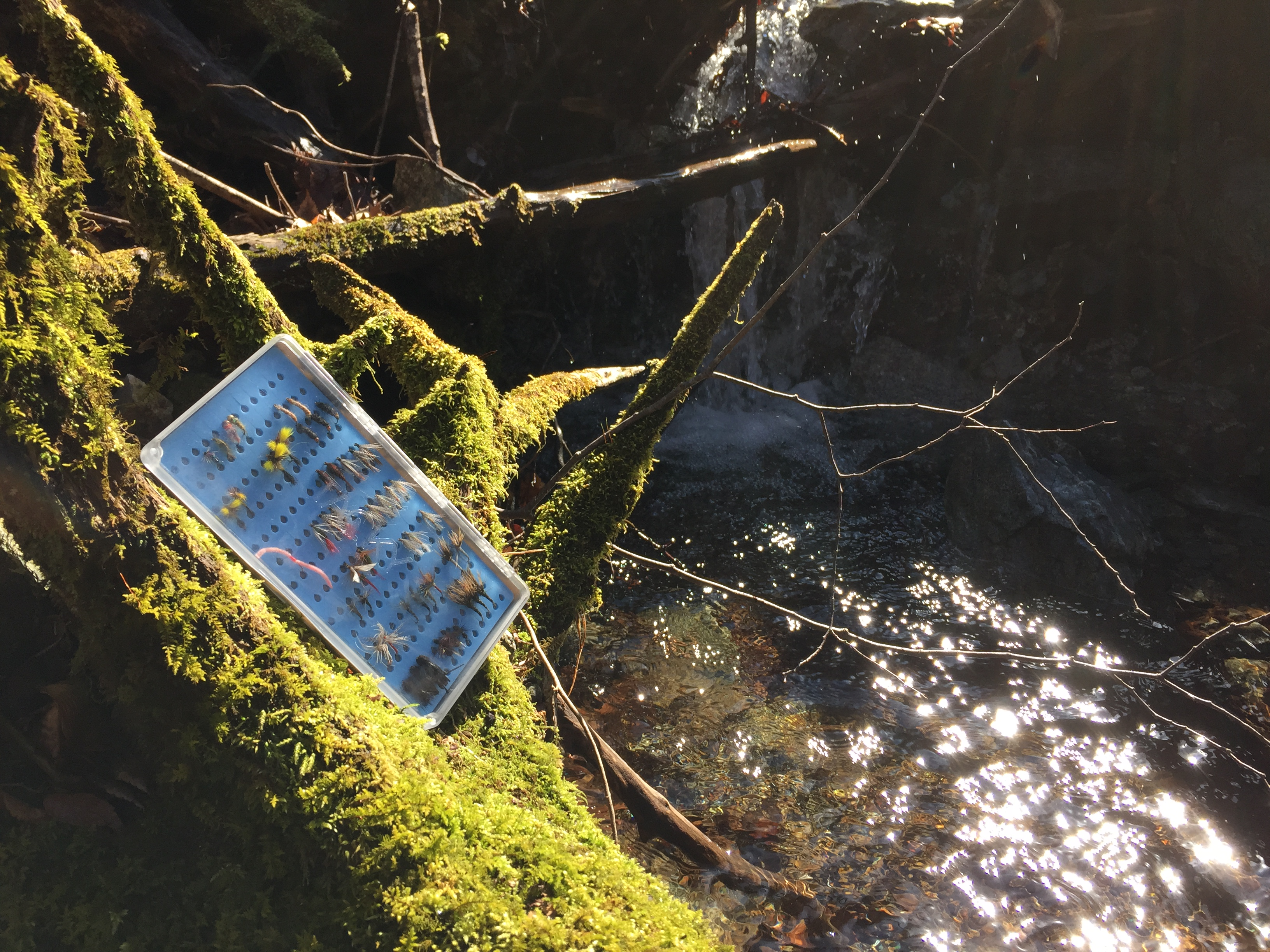 Tacky fly box for fly fishing review seattle backpackers for Fly fishing box