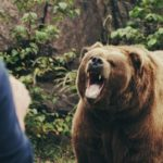 Grizzly Bear Kills Man in Glacier National Park