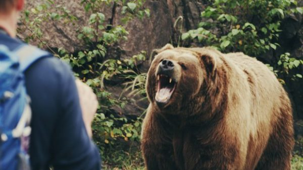 grizzly bear kills man