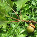 Plants Backpackers Should Know, Part 2