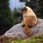 Camp Visitors – Small mammals that might (or might not) eat your breakfast