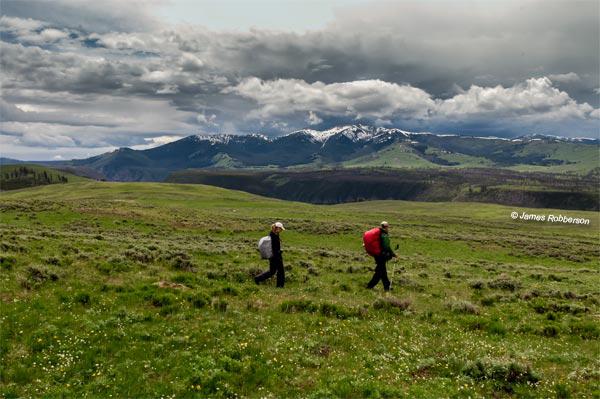 Specimen-Ridge-Yellowstone