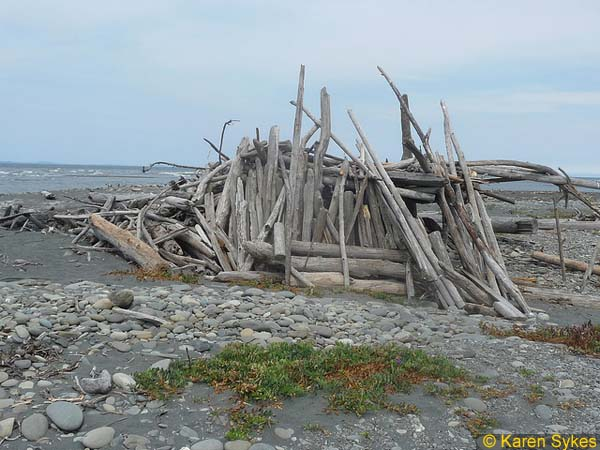 Exploring The Olympic Peninsula