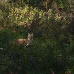 Spotting Wildlife On A Hike | Trail Tips