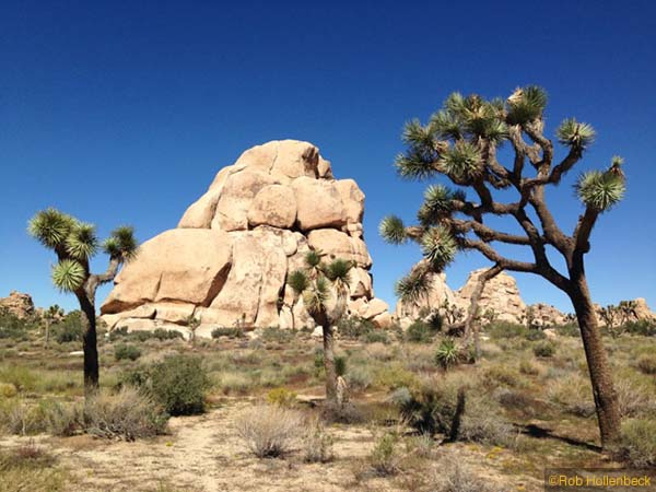 1-Joshua Tree NP