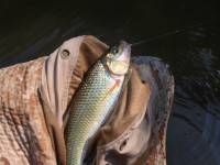 Tenkara – An Introduction to Simple Fly Fishing