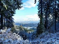 Wilderness Lessons from the Conifers
