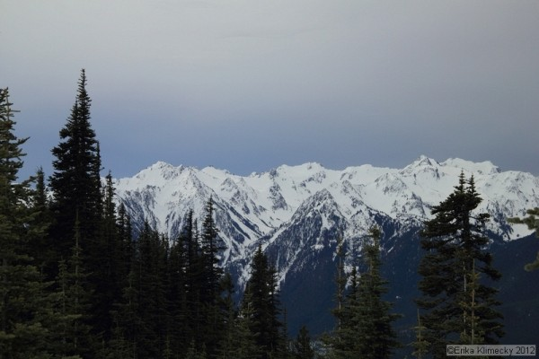 Hurricane Ridge Snowshoe