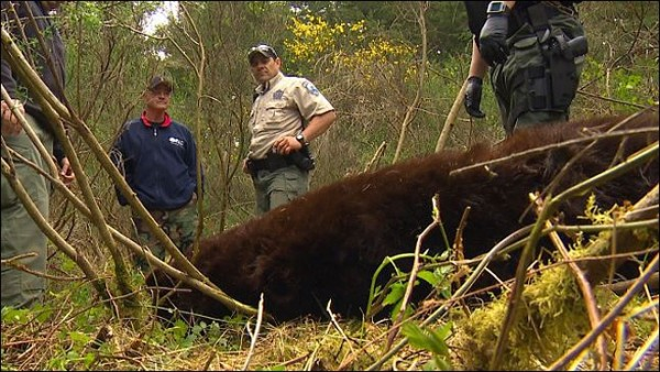Man attacked by bear at JBLM