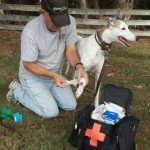 An Intro to Pet Medical Care