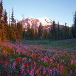 Renowned Guide Book Writer Tami Asars – The PCT Experience in Her Own Words