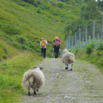 Trail Report: Walking the West Highland Way