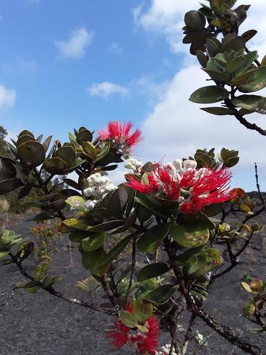 KEAUHOU BAY – BIG ISLAND of HAWAII - Seattle Backpackers